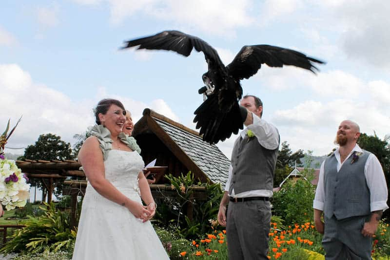 Wedding_with_an_eagle8
